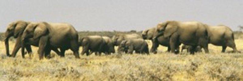 103 Namibia